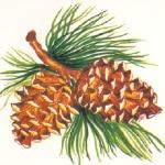 pine cones-p19ab8ee7m1au1mgj1p921j5ucim